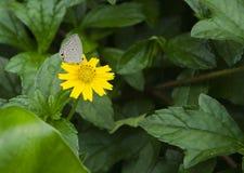 黄色花在庭院里 图库摄影