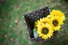 黄色花在庭院里 免版税库存图片