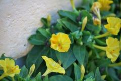 黄色花在绿色植物中 免版税库存图片