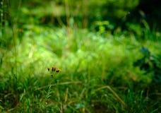 黄色花在阳光下 免版税库存照片