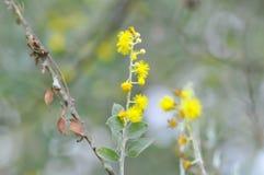 黄色花或草花早晨 图库摄影
