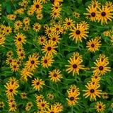 黄色花无缝的纹理 库存图片