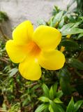 黄色花有绿色背景 免版税图库摄影