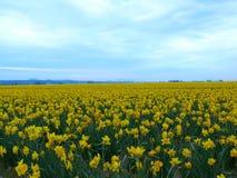 黄色花的域 库存图片