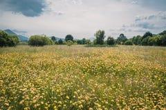 黄色花的领域在Urdaibai生物圈储备的沙子的在巴斯克地区 图库摄影