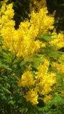 黄色花,春天夏天自然照片,浪漫花卉装饰 免版税库存图片