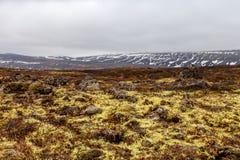 黄色草和山多雪的上面在一片石岩石沙漠的 图库摄影