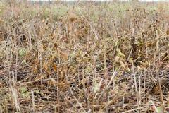 黄色草在秋天 免版税图库摄影