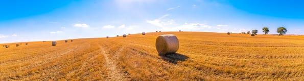 黄色草地干草捆风景在与w的蓝天下 免版税库存照片