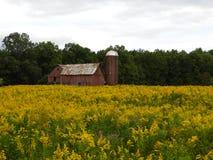 黄色菊科植物的秋天领域的被放弃的红色谷仓 免版税库存图片