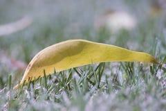 黄色落叶绿草叶子 免版税库存图片
