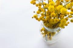 黄色蓬松花含羞草花束在一个小玻璃花瓶的 S 库存照片