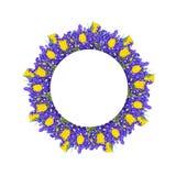 黄色郁金香和蓝色虹膜在圆的花卉框架开花 免版税库存照片