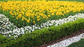 黄色郁金香庭院在Emirgan 免版税库存照片