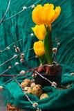 黄色郁金香用在黑罐、杨柳和棉织物的肿胀 复活节构成用鹌鹑蛋 花森林春天白色 库存图片