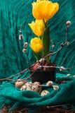 黄色郁金香用在黑罐、杨柳和棉织物的肿胀 复活节构成用鹌鹑蛋 花森林春天白色 免版税库存照片