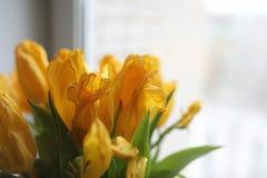 黄色郁金香花束在一个花瓶的在窗台 礼物t 免版税库存照片