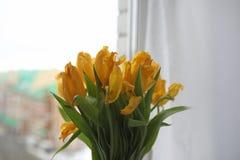 黄色郁金香花束在一个花瓶的在窗台 礼物t 免版税图库摄影