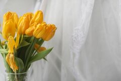 黄色郁金香花束在一个花瓶的在窗台 礼物t 图库摄影
