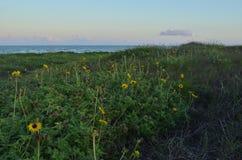 黄色野花渐近白色沙丘道路支持 免版税库存图片