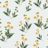 黄色野花的无缝的典雅的花卉样式 任意地驱散植物的主题 皇族释放例证