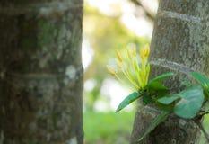黄色钉花卉生长在大树之间在庭院里在早晨 免版税库存图片