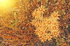 黄色青苔和脊椎在埃特纳火山 黑火山的地球、火山的熔岩和石头 在埃特纳火山的雾 西西里岛的海岛, 库存图片