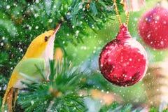 黄色鸟圣诞节装饰品和红色垂悬在与雪作用的树的球装饰 免版税库存图片