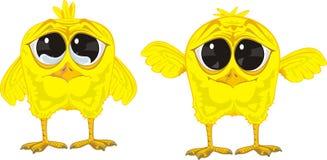 黄色鸡 库存照片