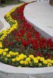 黄色,红色和绿色春天培养花床设计 免版税库存图片