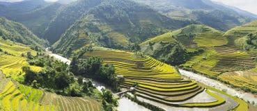 黄色,绿化,旅行,自然,风景,亚洲人,种族,农村,领域,植物,国家,谷,山,生态,热带,  免版税库存照片
