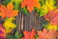 黄色,绿色和红色秋季色的槭树框架在木背景离开 结合被生成的另外风险秋叶hdr图象三 库存照片