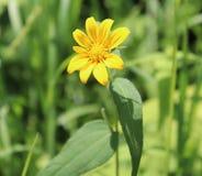 黄色,花,外部,模糊的背景 免版税库存图片