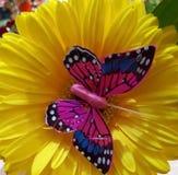 黄色,花,蝴蝶,桃红色,美好,颜色,明亮 免版税库存照片