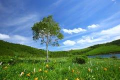 黄花菜和结构树 免版税图库摄影