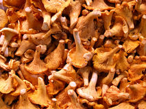 黄蘑菇副食品蘑菇存储 免版税库存照片