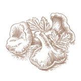 黄蘑菇堆用荷兰芹 免版税库存照片