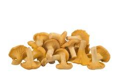 黄蘑菇组蘑菇 免版税库存照片