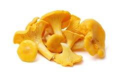 黄蘑菇蘑菇 免版税图库摄影