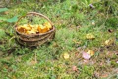 黄蘑菇蘑菇 免版税库存图片