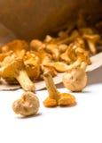 黄蘑菇采蘑菇纸张 图库摄影
