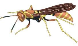 黄蜂传染媒介例证 皇族释放例证
