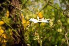 黄蜂吃花蜜 免版税库存照片