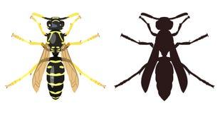 黄蜂和它的剪影的颜色图象 也corel凹道例证向量 免版税库存图片