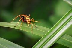 黄蜂的图象在绿色叶子的 昆虫 敌意 库存照片