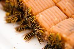 黄蜂的 免版税图库摄影