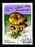 黄褐色的漏斗盖帽(杯伞属inversa),蘑菇serie,大约199 库存图片