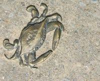 黄铜螃蟹 库存照片