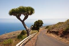 黄雀色海岸海岛la palma 库存图片