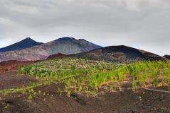 黄雀色el海岛西班牙teide tenerife火山 库存图片